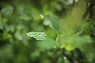 after rain sara augusto 4