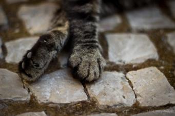 Não era um gato bonito. Mas as patas eram vulgarmente perfeitas.