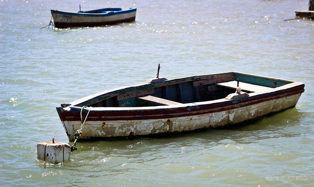 apodrece o meu barco sara augusto