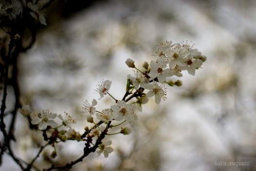 春 sara augusto 2
