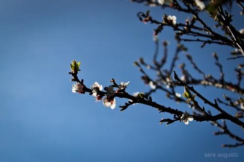 春 sara augusto 7